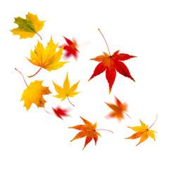 Wall Mural - Herbststurm mit fliegenden Blättern vor weißem Hintergrund