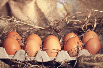 chicken eggs on the farm