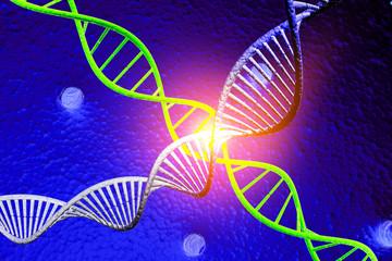 DNA molecule..