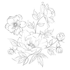 Bush of beautiful peonies.