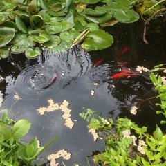 Bilder und videos suchen fischfutter for Karpfen im gartenteich