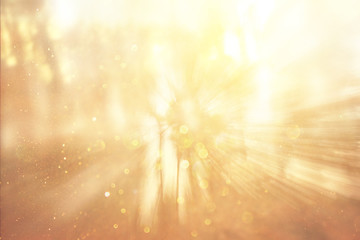 blurred abstract photo of light burst among trees and glitter bo