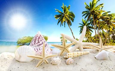 Auszeit: Muscheln und Seesterne an Karibischem Traumstrand :)