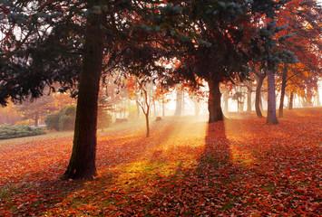 Autumn forest park landscape