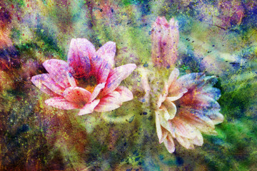 messy colorful watercolor splatter and beautiful pink flowers