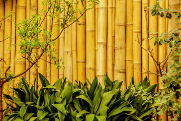 Bamboo fence in asian garden