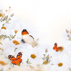 Fototapete - Spring bouquet of daisies and butterfly, floral background