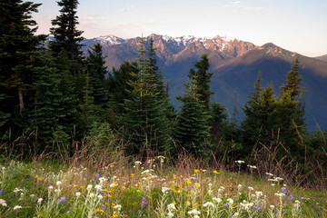 Wall Mural - Alpine Meadow Wildflowers Hurricane Ridge Olympic Mountains