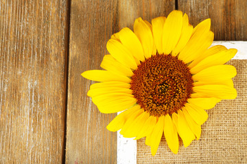 Beautiful sunflower on frame on wooden background