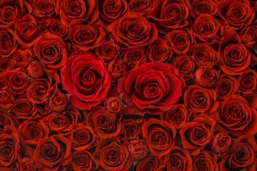 Collectie van roze bloemen