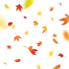 autumn leaves falling, vector illustration