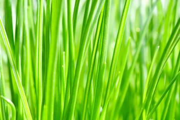 Frühlingslune. Grün und fit