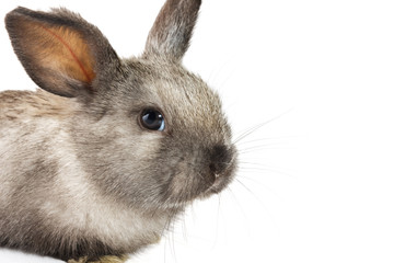 Baby rabbit on white background