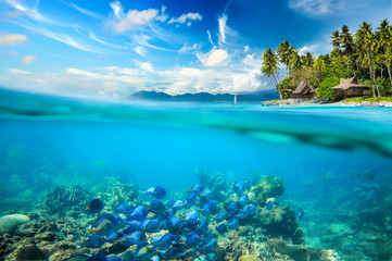 Foto op Canvas Onder water Coral reef, colorful fish