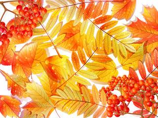 Group autumn multicilor leaves on white.