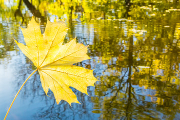 Yellow maple leaf on a background of water reflections of autumn