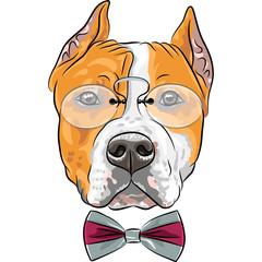 vector cartoon hipster dog American Staffordshire Terrier