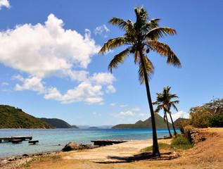 Tortola Palm