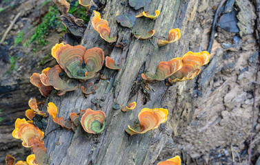 colorful mushrooms grow in forest , thailand