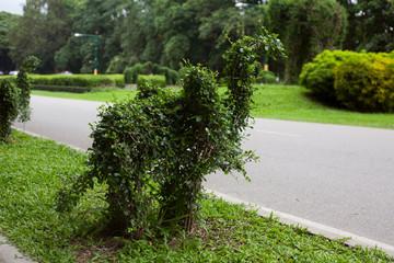Bending trees in the shape of elephant in garden