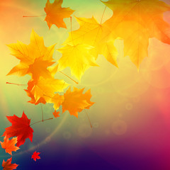 Beautiful autumn Leaves.