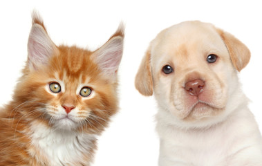 Wall Mural - Kitten and puppy. Close-up portrait
