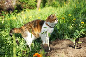 Cat hunts in the garden.