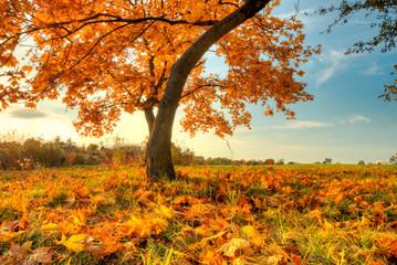 Aluminium Prints Autumn Beautiful autumn tree with fallen dry leaves