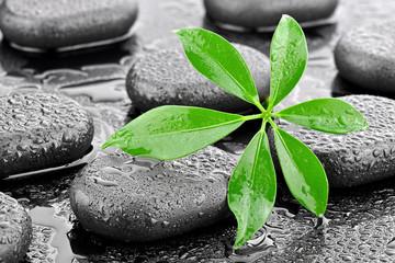 Liść z kamieniami bazaltowymi
