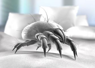 Staubmilbe im Bett