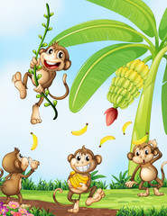 Playful monkeys near the banana plant