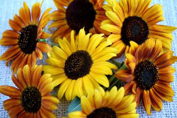 seven sunflowers