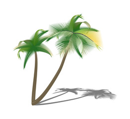 Isolated palm trees with shade. Vector illustration