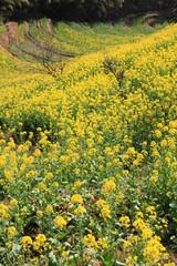 spring landscape China