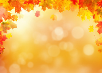 Autumn leaves background with free space for text