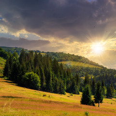 coniferous forest on a  mountain slope at sunset