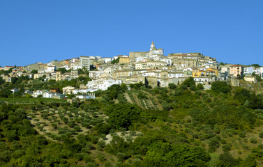 Oppido Lucano, ancient town and olive trees - Basilicata Italy