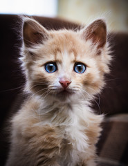 Small surprised kitten