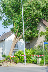Baum  gegen Hausgiebel gestürzt