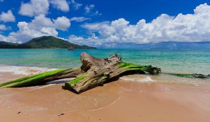 Nai Yang Beach blue cloundy sky with old tree  Phuket,Thailand,
