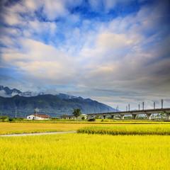 Nice paddy place
