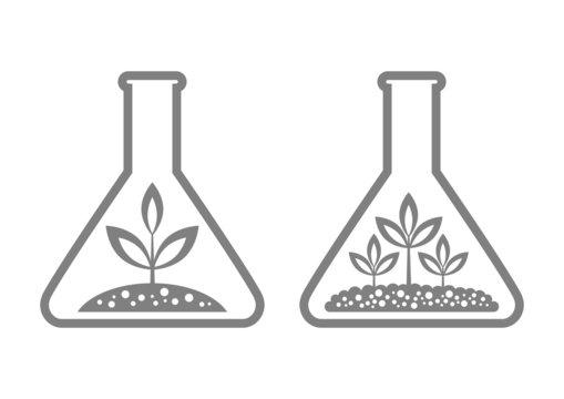 Plant in laboratory glass