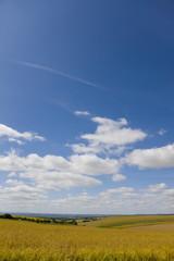 Clouds in blue sky over oat field