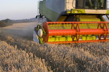 Wheat harvester