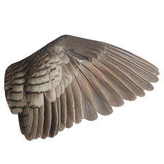 Wall Mural - Wing