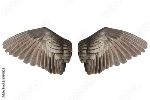 Wall mural Wings