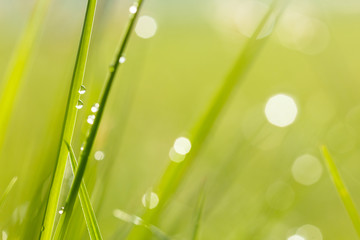 water drops on grass background