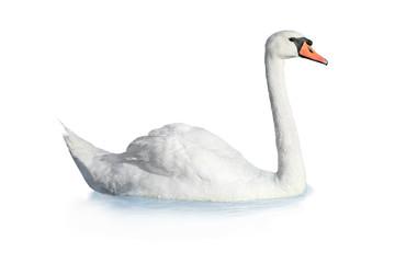Keuken foto achterwand Zwaan Bird swan