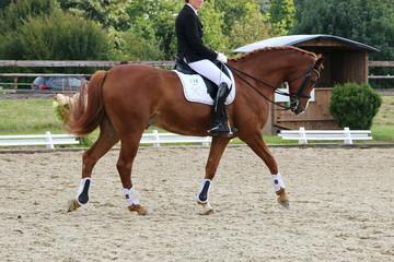 Pferdesport Dressur Turnier Kür