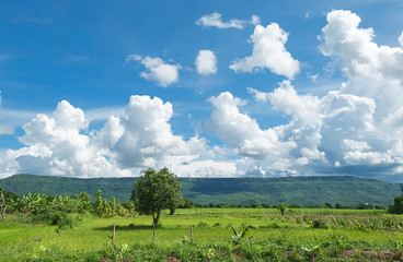 Mountain meadow with bright sky. Clouds float